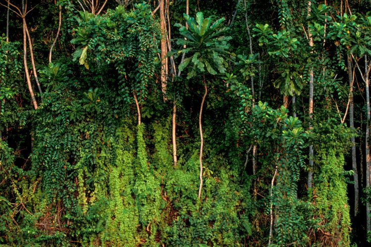 Get up to $70,000 for Storytellers in the National Geographic Stories of Tropical Rainforest