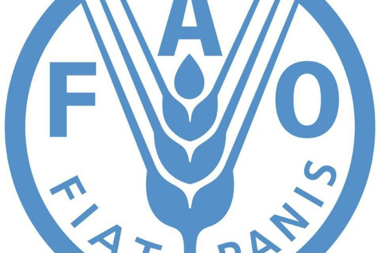 Get an opportunity to be a UN fellow in the Food and Agriculture Organization of the United Nations (UN FAO) Fellows Program 2021